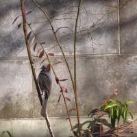 庭に来る野鳥達・・・・・・・・
