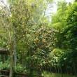 ツバメと竹林