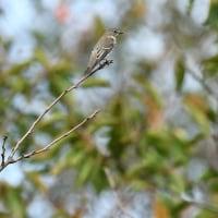 季節の野鳥