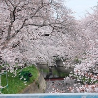 桜の季節に