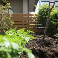 夏野菜の畑の準備