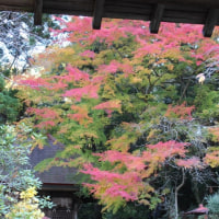 ぶらり旅・玉簾寺(茨城県日立市)