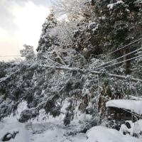 電線に木が 気が木やない