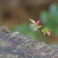 樹木が主役の写真ー11