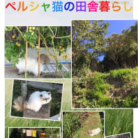 ペルシャ猫とタヌキが走る山から(=╹◡╹)動画de癒やしのハッピー〜!