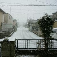 雪降ってます。