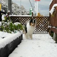 初雪~♪そして悲劇・・・