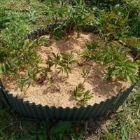 初めての刈払機とジャガイモの植え付け
