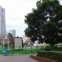 全国都市緑化フェア準備中の横浜ベイエリア散策と大桟橋マルシェ