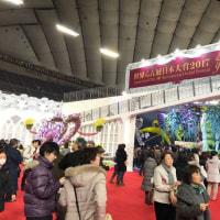 東京ドーム世界蘭展