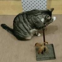 ネズミちゃんを探せ❗
