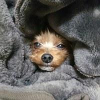 毛布の妖精