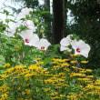 真夏の、中津公園の花たち