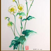 はるか昔、中国からやってきたのか秋明菊