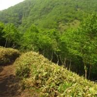 赤城山登山 黒檜山~駒ヶ岳