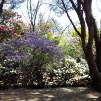 シャクナゲの咲く公園のひと時!