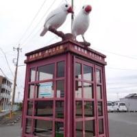 金魚と白文鳥のまち 弥富へ(2)