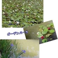 浜名湖ガーデンパーク  2