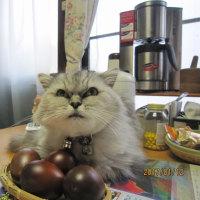 「面白い!燻製卵に(^^♪」