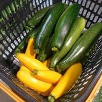 初夏の野菜たち