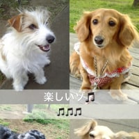 Sound Of Music♪ ♪ ♪
