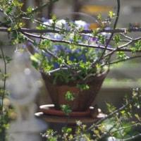 小さな庭をカメラでパシャリ♡