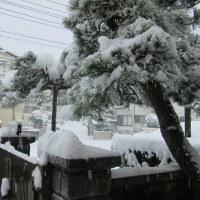 1 2019(H29)年 新年の大雪に遭遇  居宅の玄関前にて