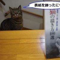モデル詐偽(=^・^=)