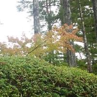 ブログ160913 高野山~熊野古道の旅  壇上伽藍