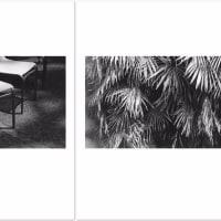 ゴトーマサミ WEB 写真展(240) #Summicron-Straight