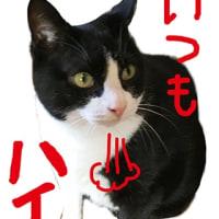 イダテン猫