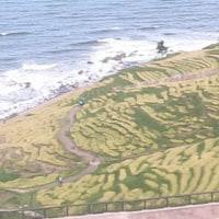 千枚田も稲刈りの季節です。
