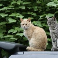 猫写真家岩合さん