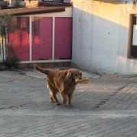 トルコの超日常風景