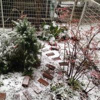 雪の日 ー2