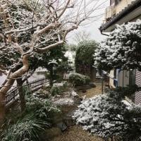 久しぶりに積もった雪