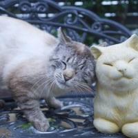 薔薇と猫とスナップえんどうのマヨ炒め