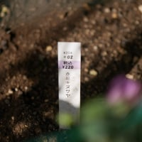母の庭の・・・ 豆族♪
