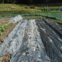 夏野菜の畝の支柱の準備 そして畑全景