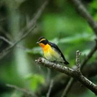 小鳥達のパフォーマンス集