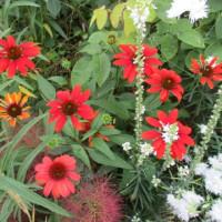 花壇 花の入れ替え前 2017.6.26