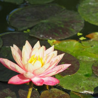 植物園散歩~観賞温室の花