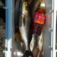 午前便、イサキ釣りです。