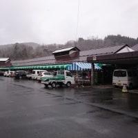 雪見ナメコと雪ヒラタケ