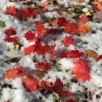 10月の大雪・・・一夜明けて