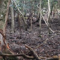 天然記念物の雑木林へ行ってみることに・・・