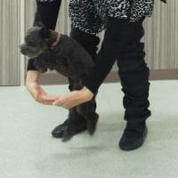 ダンスのあとはマスコット犬の地味活動…ですぅ