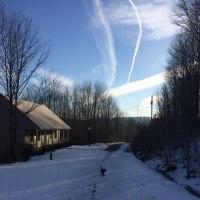 一か月ぶりに犬猫散歩をした暖かい月曜日