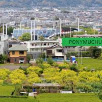 静岡鉄道1000形とちょっと見える茶畑 (2017年5月)