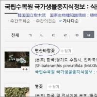 日韓の「春の妖精」たち